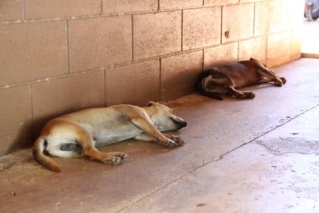 観光客そっちのけで寝てる犬
