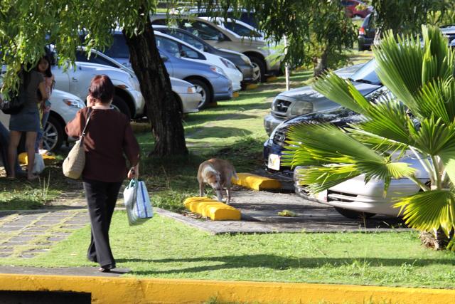 駐車場を散策する犬