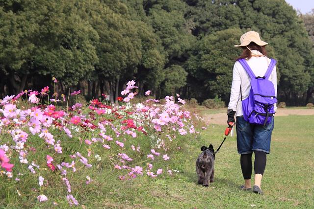コスモス畑を彼女と歩くエース