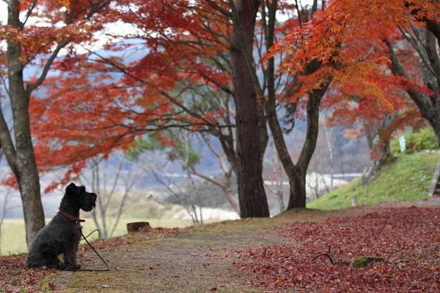 紅葉を見つめるエース