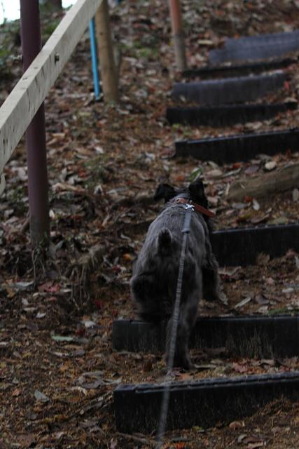 階段駆け上がるエース