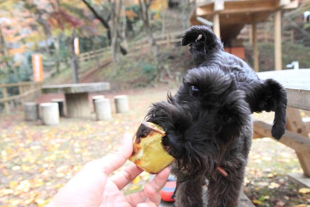焼き芋に喰らい付くエース