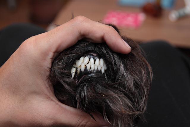 エースの前歯