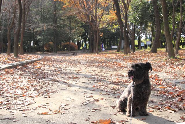 秋を感じるエース