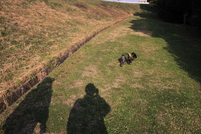 3人で散歩なエース