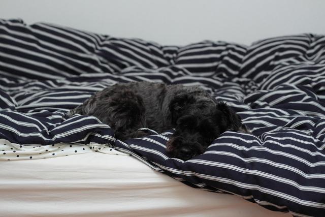 エース寝とるし