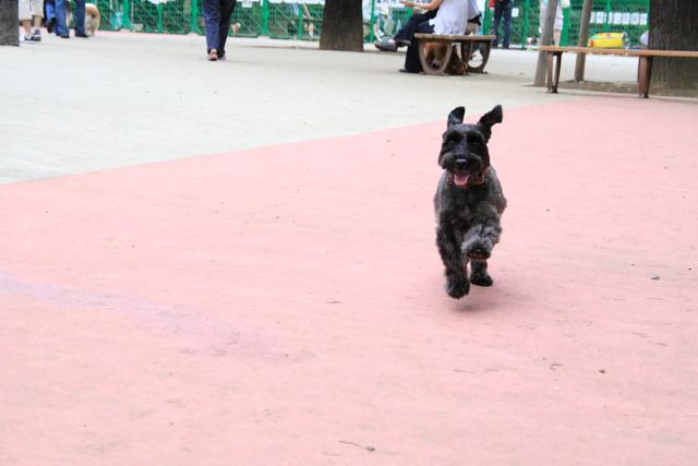 駒沢でも笑顔で走るエース
