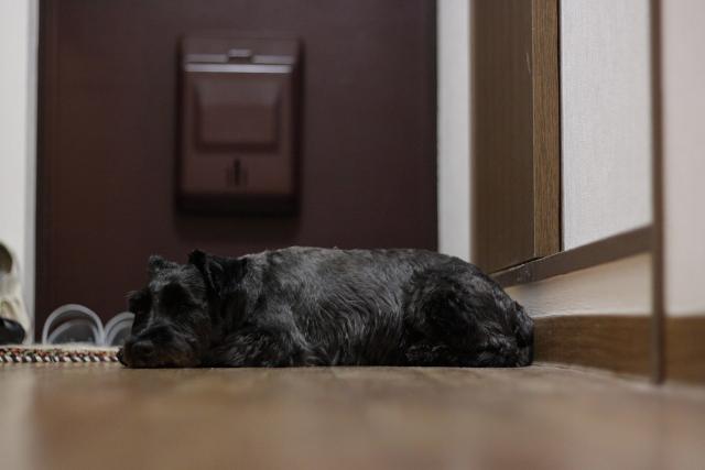 寝てるエース