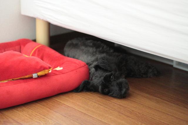 ベッドとベッドの隙間で寝るエース