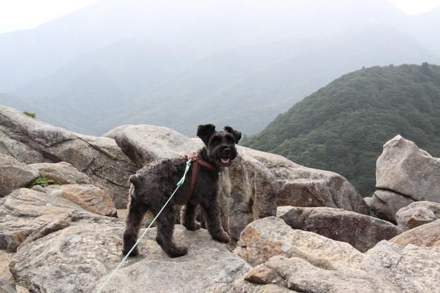 デラ崖の上のエース