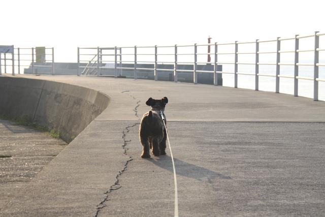 堤防を散歩なエース