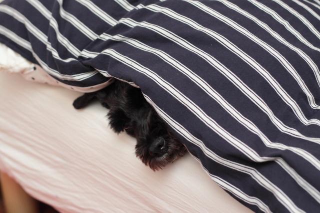 遊びに行けないんで潜り込んで寝るエース