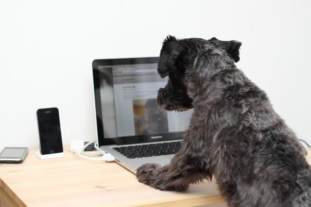 自分のブログを覗き込むエース