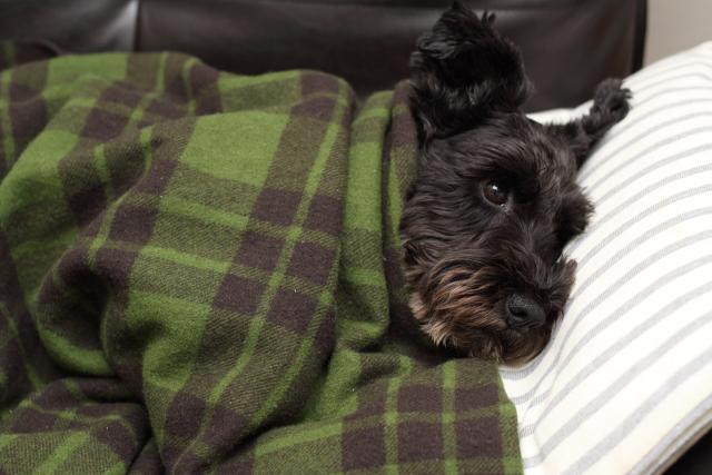 ソファーで寝る俺をまねるエース