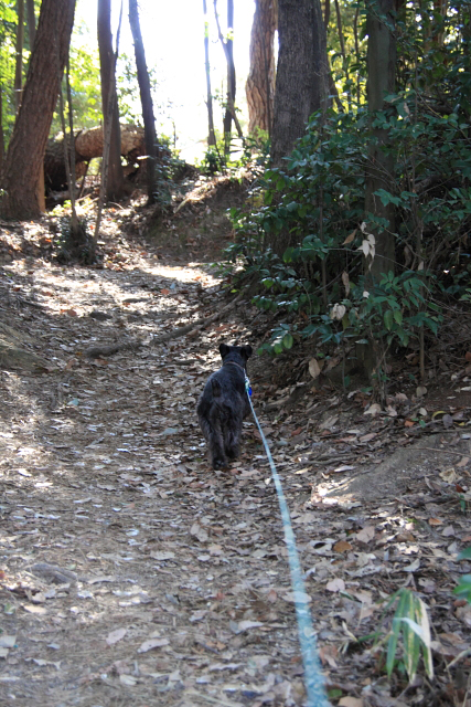 森散歩なエース