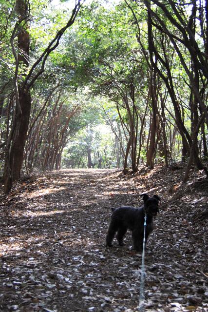 どんどん森散歩なエース