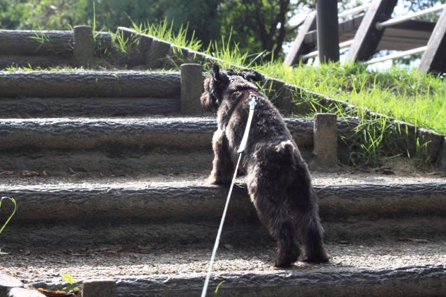 階段なエース