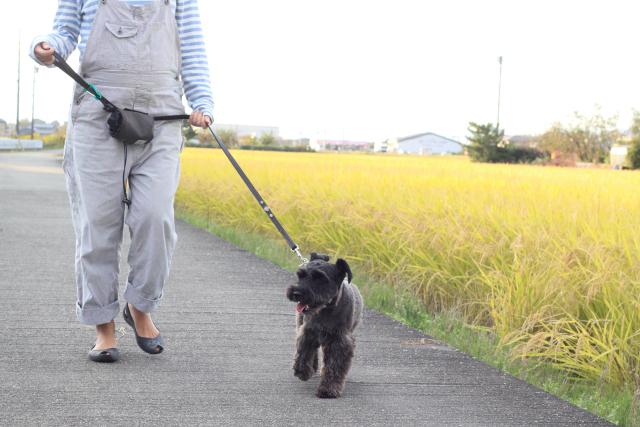 妊婦と散歩なエース