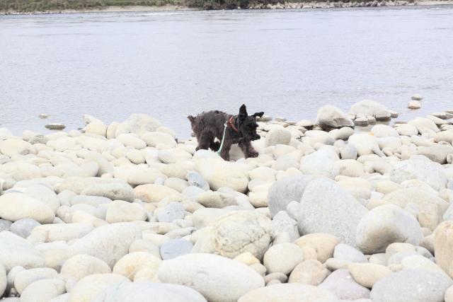 河原を駆け回るエース