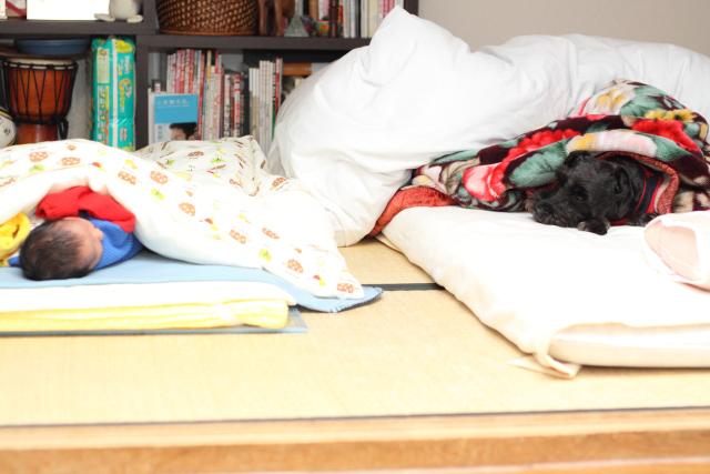セガレを見ながら寝るエース