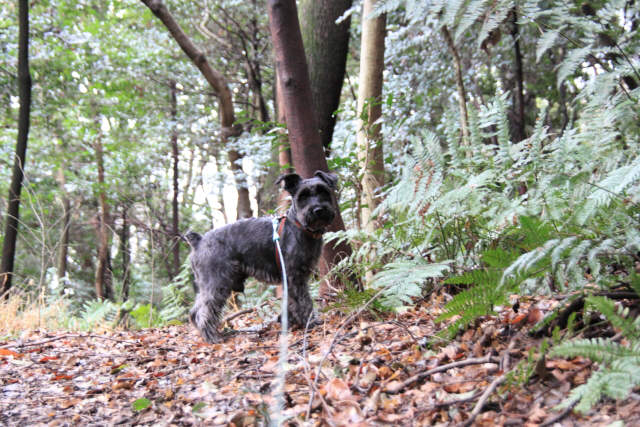 リードがなければ森に還りそうなエース