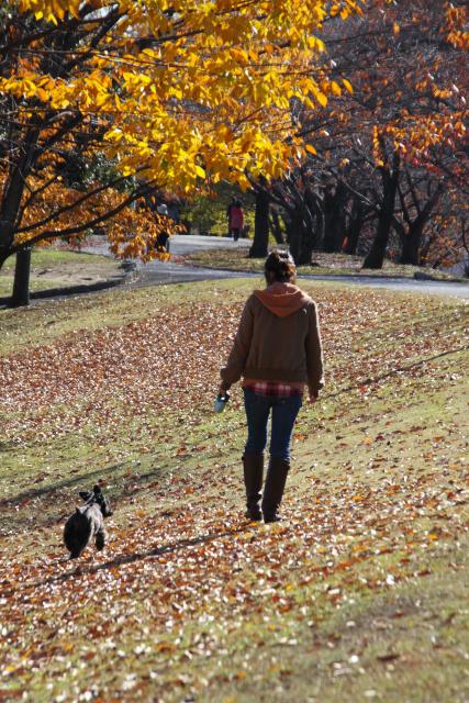 秋散歩なエース
