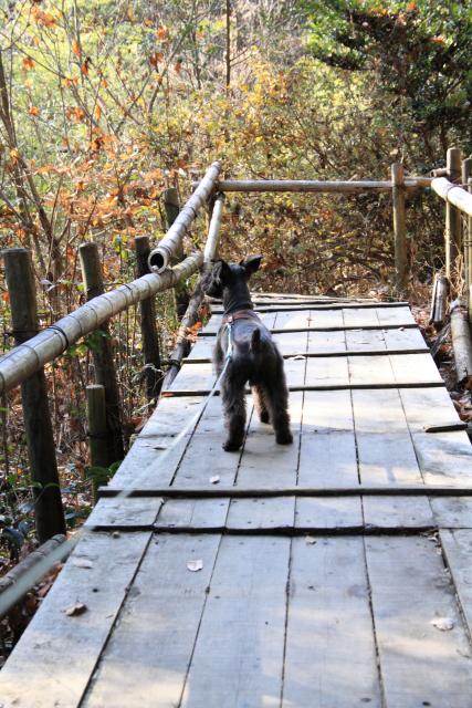 橋の上なエース