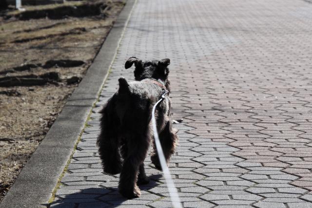 極寒散歩なエース