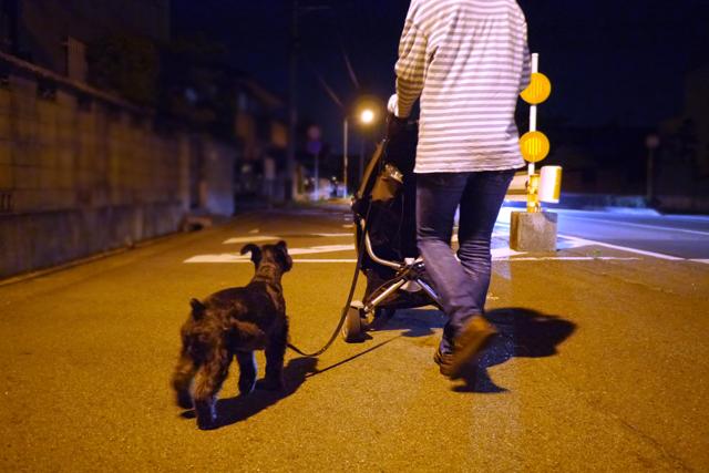 夜散歩なエース
