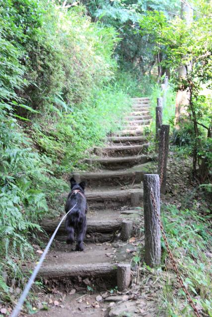 階段登りなエース