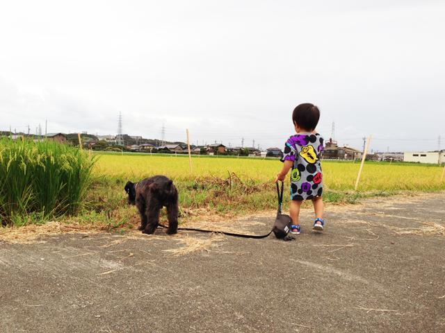エースな散歩